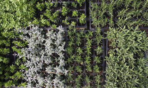 Culture Des Plantes by Culture Des Plantes Aromatiques Fleur De