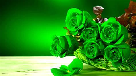 rose flower wallpaper hd pixelstalknet