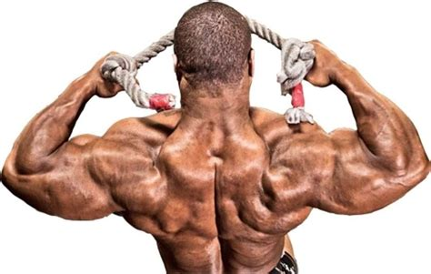 cable face pull exercise guide bodybuilding wizard