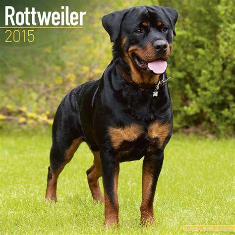 rottweiler episode rottweiler calendars 2018 on abposters