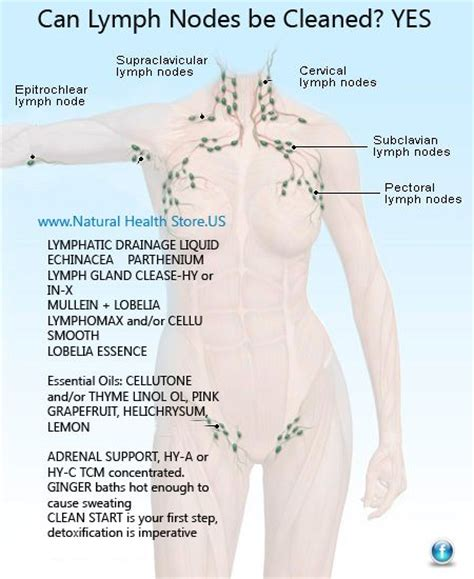 How To Detox Your Lymphatic System Naturally by 112 Best Lymph Node Cleanse Images On Health