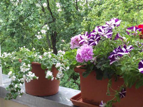 balkonpflanzen sonnig sonnige balkonpflanzen gartenelfe