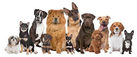 imagenes niños diferentes razas razas de perros de trabajo con fotos