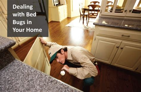 Dealing With Bed Bugs by Dealing With Bed Bugs In Your Home