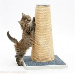 Cat Scratching by The Best For A Cat S Scratching Post
