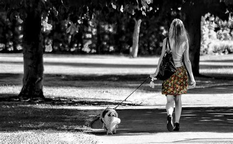 what age to start leash a puppy q a how to keep my from chasing cars when walking him basics