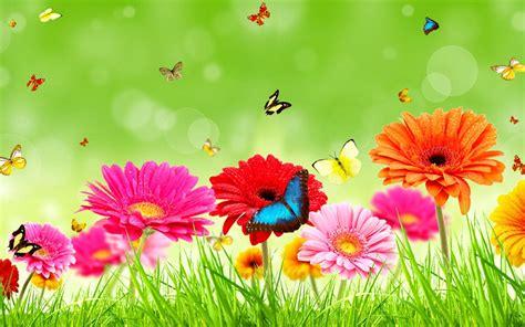 Home Design 3d Per Pc Gratis Gerberas Flowers Wallpaper 33763391 Fanpop
