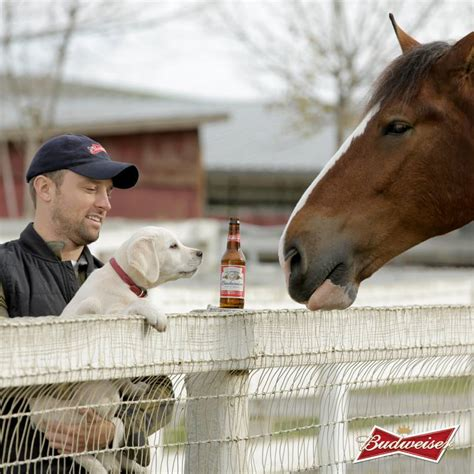 puppy commercial budweiser s bowl commercial another smart