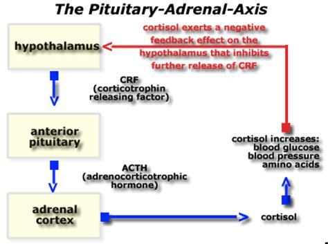 Axis Detox by Synergy Health Wellness