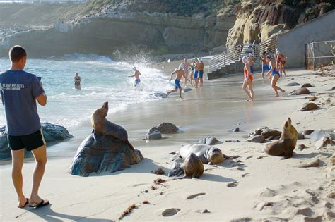 by the sea deadline city fails to meet parks beaches deadline on sea lion