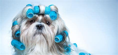 grooming service go grooming mobile pet grooming los angeles palo alto