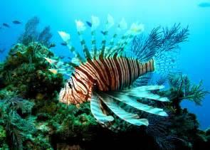 Recomiendan no comer pez le 243 n posible envenenamiento por ciguatera