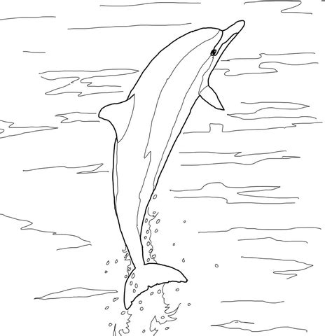 coloring pages dolphins jumping spinner dolphin jumping coloring page free printable