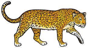 leopard stock illustrations vectors amp clipart 4 240
