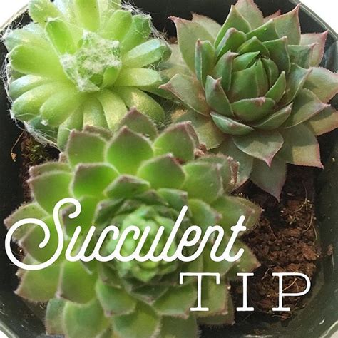 Soil Mix For Outdoor In Ground Succulents - i often get asked if regular potting mix soil is okay for