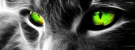 imagenes de ojos verdes para facebook gato de ojos verdes con una mirada misteriosa facebook