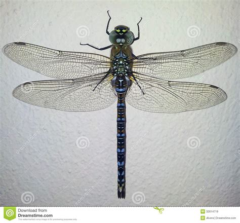 free detailed macro images and stock photos freeimages dragonfly macro stock image image of fragility beautiful 32614719