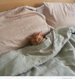 sleeping in bed cat sleeping in bed pintast
