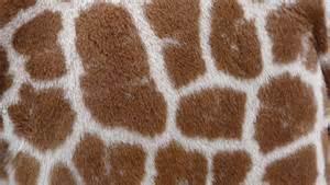 Home Builder Logo Design 10 Free Animal Fur And Skin Texture Pack