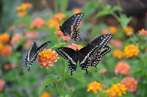 Butterfly Patio by Planting With Butterfly Friendly Plants For Your Garden
