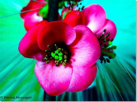 rami di fiori rami