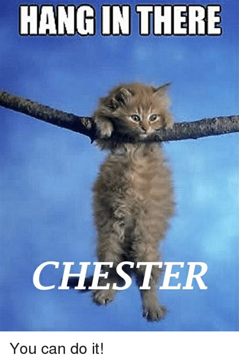 Hang In There Cat Meme - hang in there chester you can do it toosoon meme on sizzle