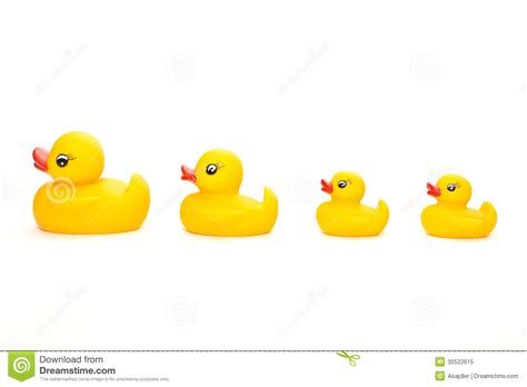 Family of ducks in a line stock image image of duckling 30522615