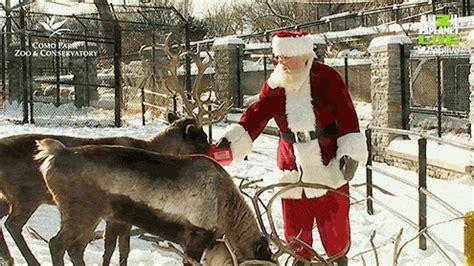 Animals christmas holidays santa santa claus