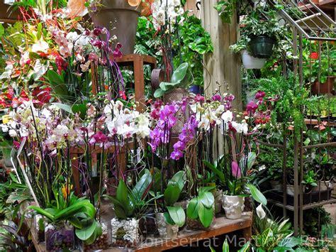 imagenes de jardines con orquideas orquideas bot 192 nic serrat