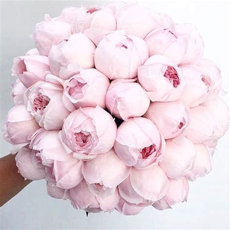 instagram pinkpeonies best 25 peonies ideas only on pinterest peony peony