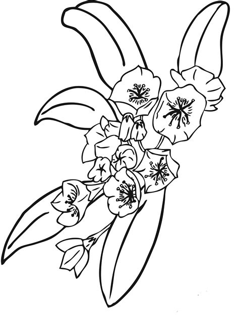 printable flower pictures to color beautiful flowers free printable flower coloring pages for kids best