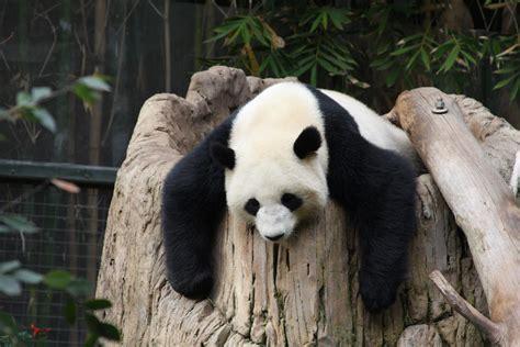 imagenes de animales zoologico animales galer 237 a kai rv