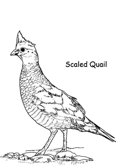 Coloring Page Quail by Coloring Sheet Quail Quail Coloring Pages Hellokids