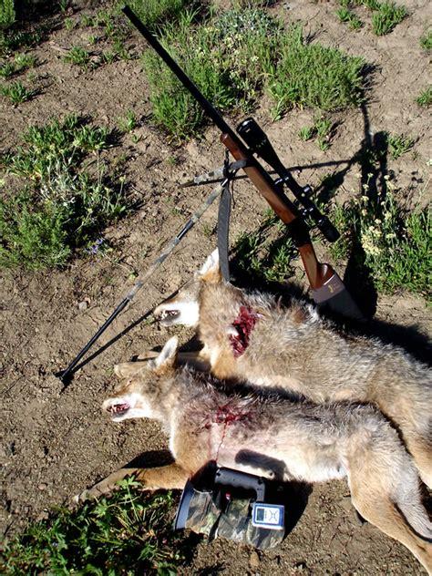 homemade electronic coyote call homemade electronic coyote call homemade ftempo