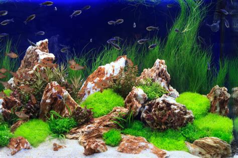 style aquascape everything about aquascaping the incredible underwater art