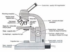 color the microscope parts microscope diagram unmasa dalha
