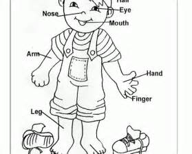 human anatomy coloring book dk preschoolers coloring pages of the human coloring home