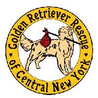golden retriever rescue nyc grrcny inc golden retriever rescue of central new york caroldoey