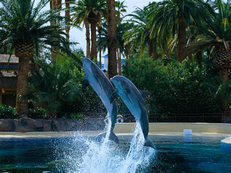 Secret Garden And Dolphin Habitat by Things To Do With In Las Vegas Family Vacation Hub