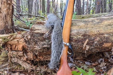 how to hunt squirrels in your backyard how to attract squirrels pro tips for hunting squirrels