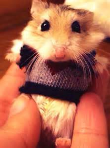 Adorable animals in sweaters very hangry