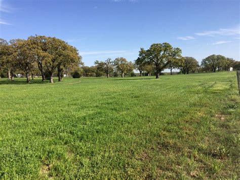 black mustang ranch pilot point black mustang ranch llc boarding farms in pilot