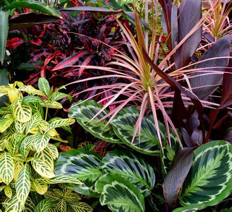 tropical perennial plants 93 best images about jungle tropical gardens on
