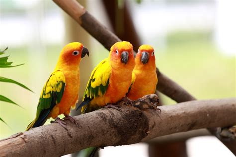 picture of love bird wallpaper hd wide birds pics litle pups birds wallpapers hd best wallpapers hd