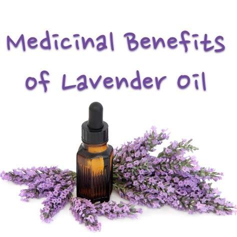 lavender essential oil uses www imgkid com the image kid has it