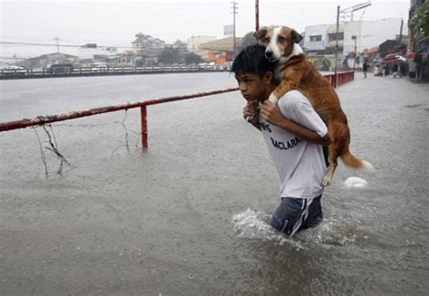 saving dogs these amazing risked their lives to save animals