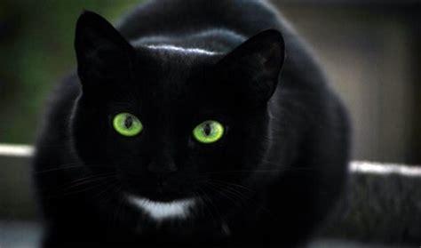 oggetti portano sfortuna perch 233 si dice il gatto nero porti sfortuna