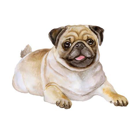 watercolor pug watercolor portrait of white and black pug breed mops pug bulldog