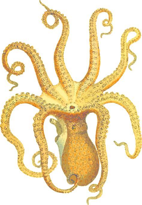 clipart octopus 3