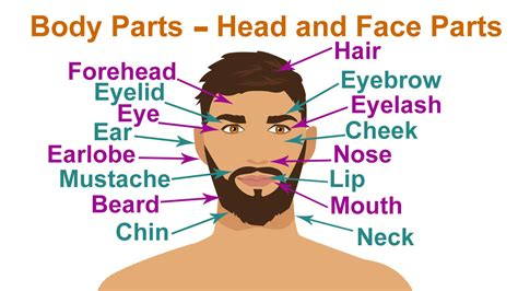 public area in body parts human body head parts body parts learn head and face
